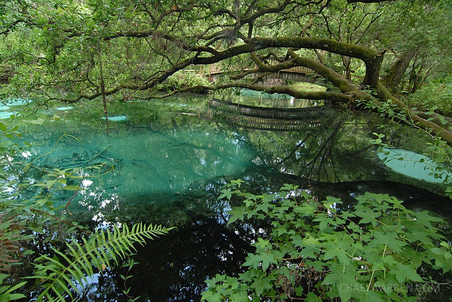 Juniper Springs - Fern Hammock Springs