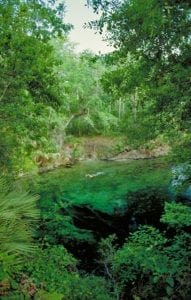 Blue Spring State Park: A Winter Haven for Manatees