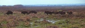 Paynes Prairie Wildlife Hike: LaChua Trail