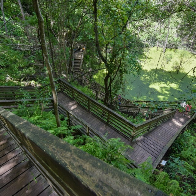 Florida Sinkholes: These 5 Trails Are Sure to Bring You Down!