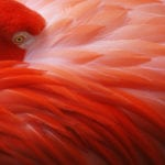 Flamingo at Homosassa Springs