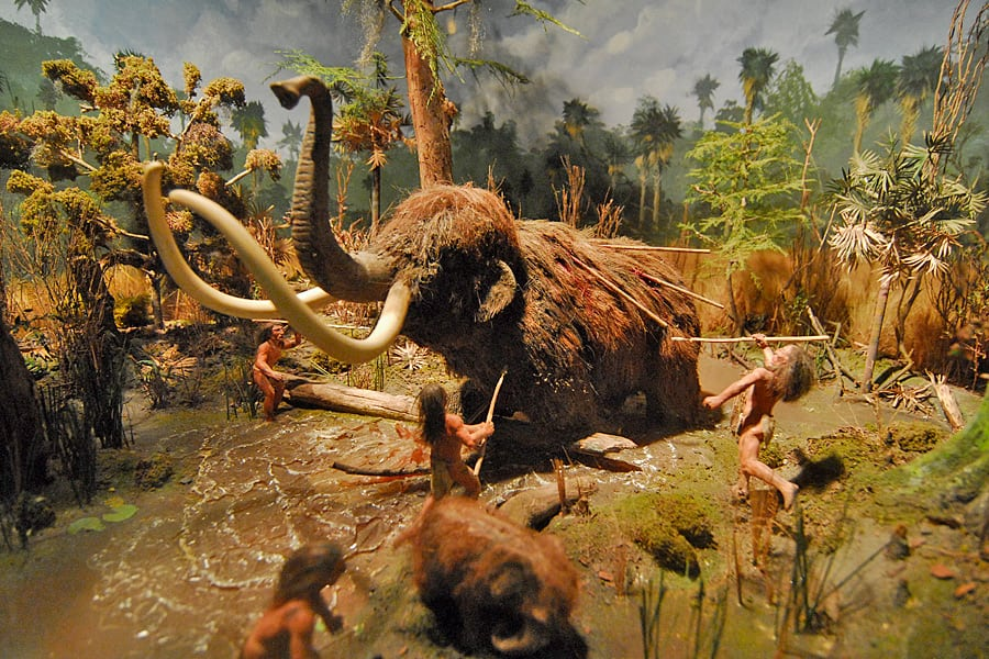 Pre-Columbian Mammoth at Silver Springs