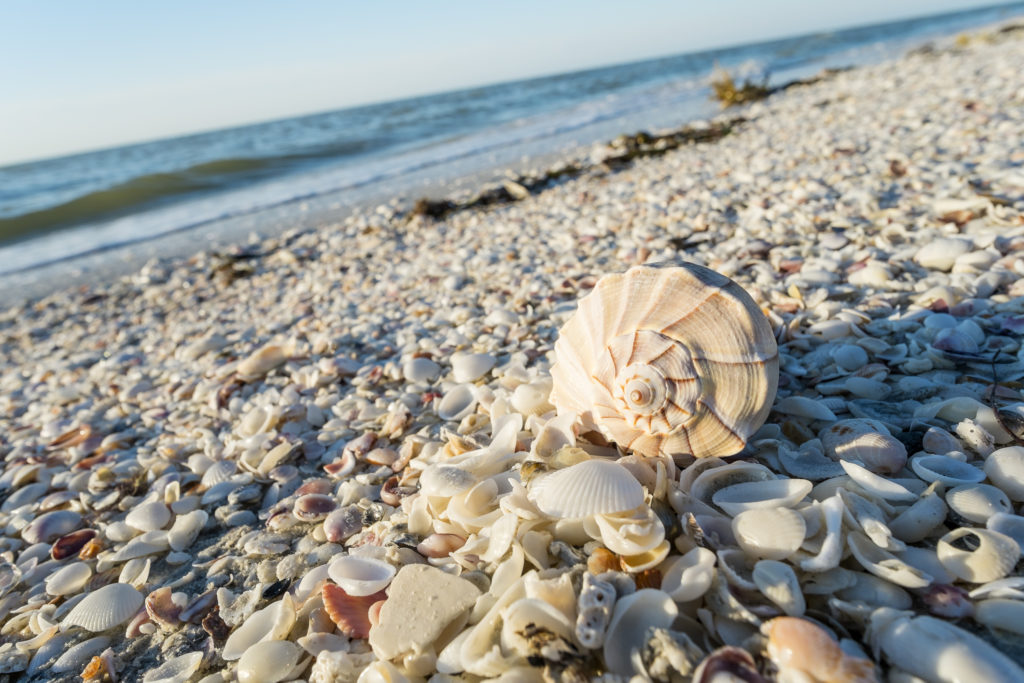 Seashells on the Beach of Sanibel Island in Florida