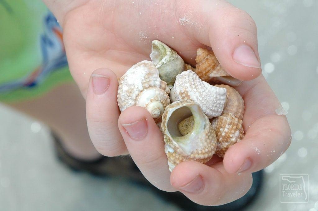 Handful of Sea Shells